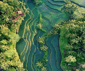 green, travel, and tropical image