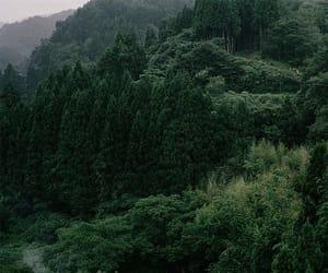лес, деревья, and зеленый image