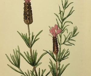 plants, mertz library, and mediterranean region image