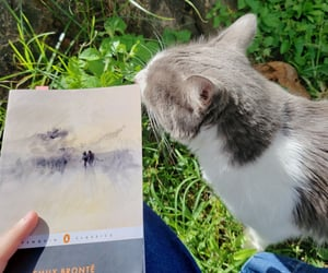 aesthetic, book, and cat image