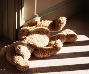 photography, sunlight, and teddy bear image
