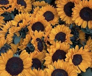 flower, flower wallpaper, and sunflower image