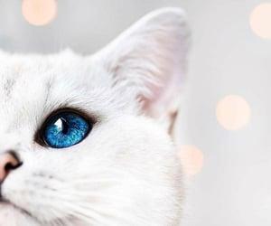 blues, lindo, and white image
