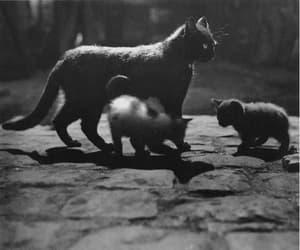 bruxa, cat, and escuro image