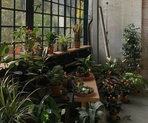 aesthetic, green, and green house image