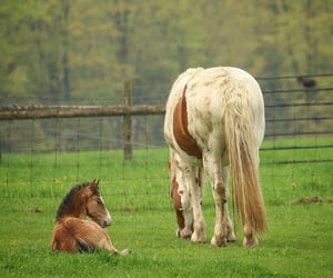 animals, farmhouse, and country living image