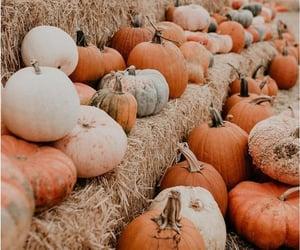 autumn, pumpkin, and orange image