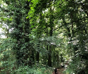 forest, trees, and walk image
