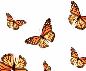 butterfly, wallpaper, and aesthetic image