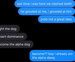 alpha, dogs, and friends image