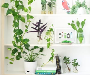 ideas, plantas de interior, and plantas image