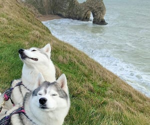 dogs, nature, and sea image