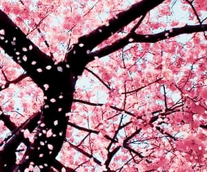 cherry blossoms, gif, and gifs image