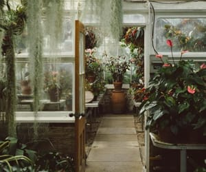 plants, greenhouse, and green image