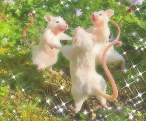 aesthetic, mouse, and cottagecore image