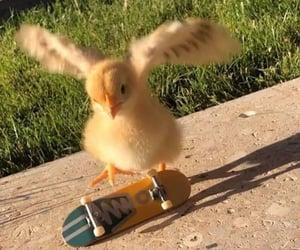 animal, skate, and Chick image