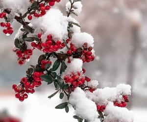 winter, snow, and red image