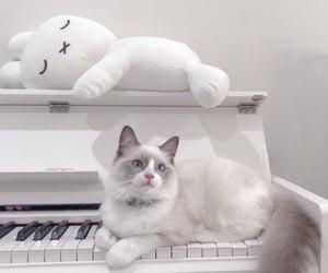 cat, ネコ, and 猫 image