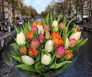 aesthetic, amsterdam, and bouquet image