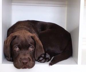 animals, box, and dog image