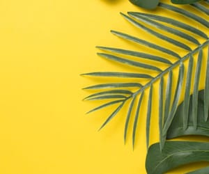 yellow, nature, and photography image
