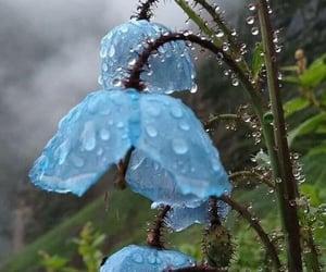 dew drops image