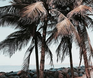 aesthetic, beach, and nature image