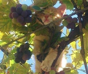 cats, grapes, and nature image