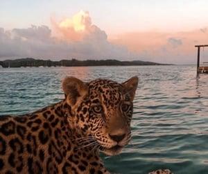animal, sea, and cat image