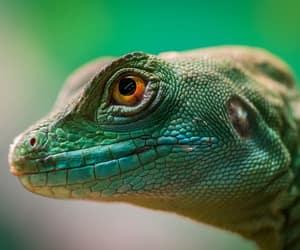 animal, animals, and naturaleza image