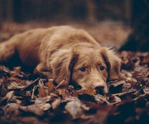 animal, dog, and nature image