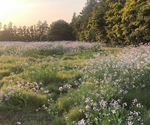 aesthetic, countryside, and flowers image
