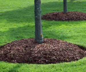 tree removal adelaide, stump removal adelaide, and mulch supplies image