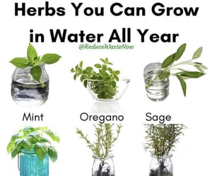 herb, herbs, and witchcraft image