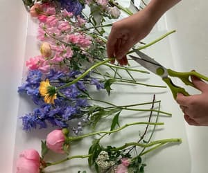 feelings, flowers, and red flowers image