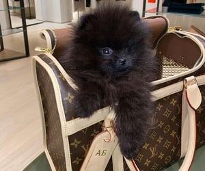 animal, dog, and adorable image