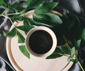 aesthetic, cup, and coffee image