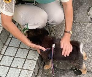 dog, yuri_nakamura, and instagram image