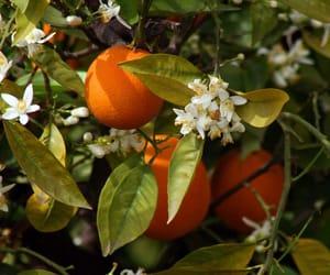 orange, flowers, and fruit image