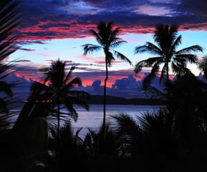 exotic, palm tree, and tropical image