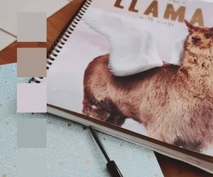 colour, llama, and stationary image