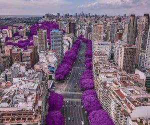 arboles, calle, and Ciudades image
