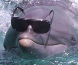 animals, shit post, and dolphin image