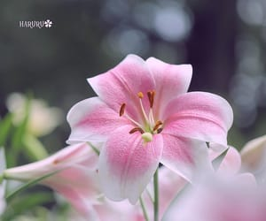 flower and instagram image
