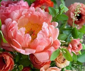 flower, flower porn, and flower power image