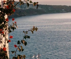 flowers, sea, and travel image
