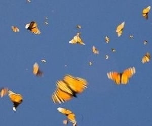 header, butterfly, and blue image