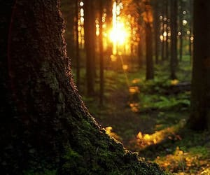 лес, красиво, and солнце image