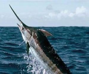animals, fish, and sea image