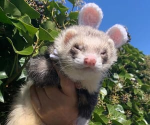 animal, ferret, and theme image